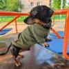 одежда для собак такса худи